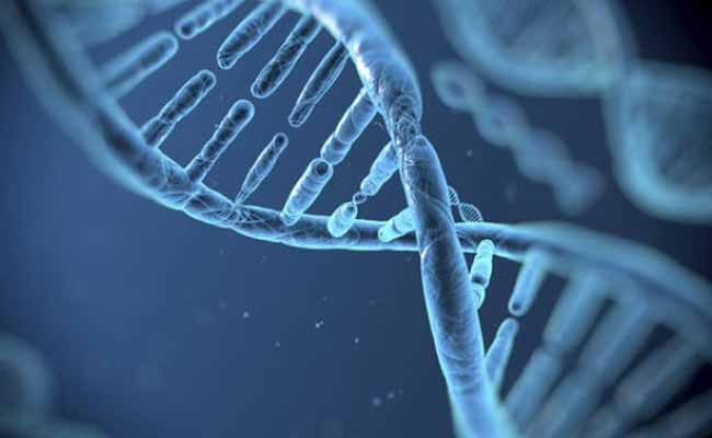 Gene editing halts Duchenne muscular dystrophy, says new Research
