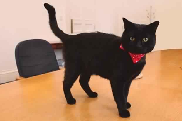 Gladstone the British cat lands Treasury job