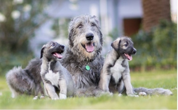 First Identical Twin Puppies Born (Picture)