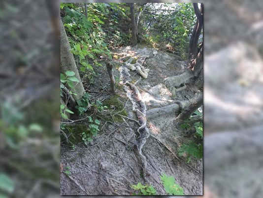 Signs of Wessie? Giant Snake Skin Found Near River in Maine