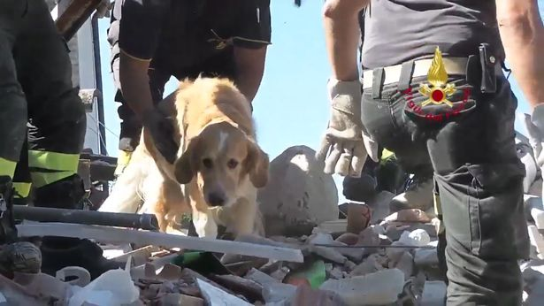 Dog Found ALIVE beneath rubble - nine days after Italy Earthquake