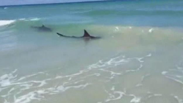 New Smyrna Beach: Sharks bite three people in 2 hours