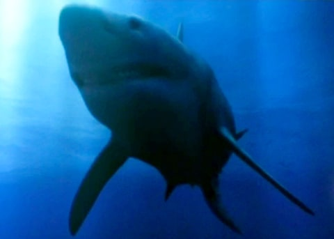 Ancient Teeth Shows Evidence of New Shark Species