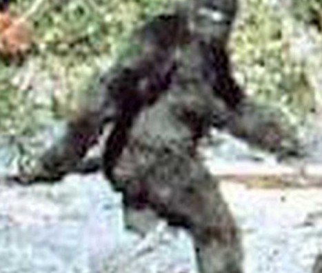 Bigfoot: Michigan EagleCam Spots Something Lurking in the Woods