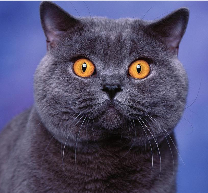 Boston: cat virus discovered in Mattapan