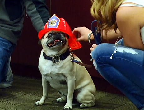 Jaxon: Idaho dog named town's 'Hometown Hero'