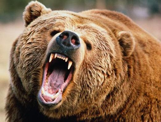 Todd Orr: Bear attack 'like a sledgehammer with teeth'