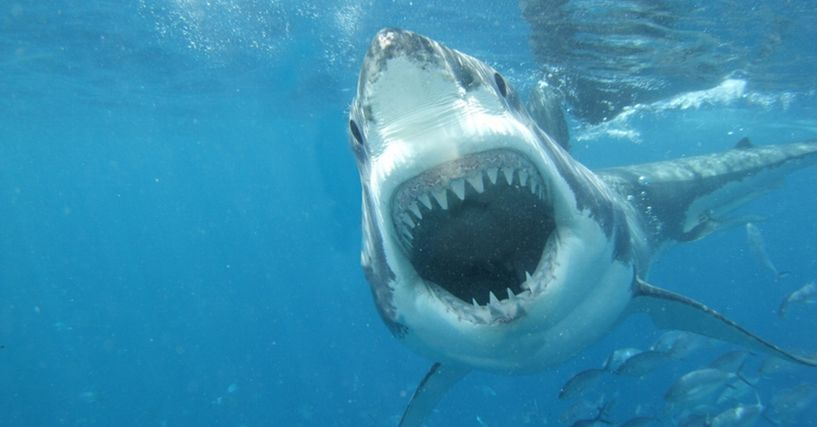Shark Attack: Teen girl fights off shark with punch in face