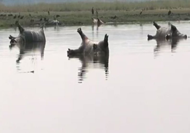 Namibia: Hippos Killed By Possible Anthrax Outbreak