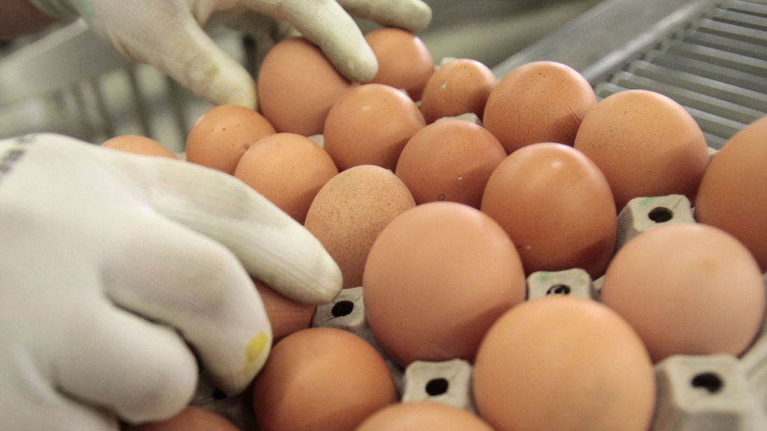 UK eggs declared safe to eat 30 years after salmonella scare