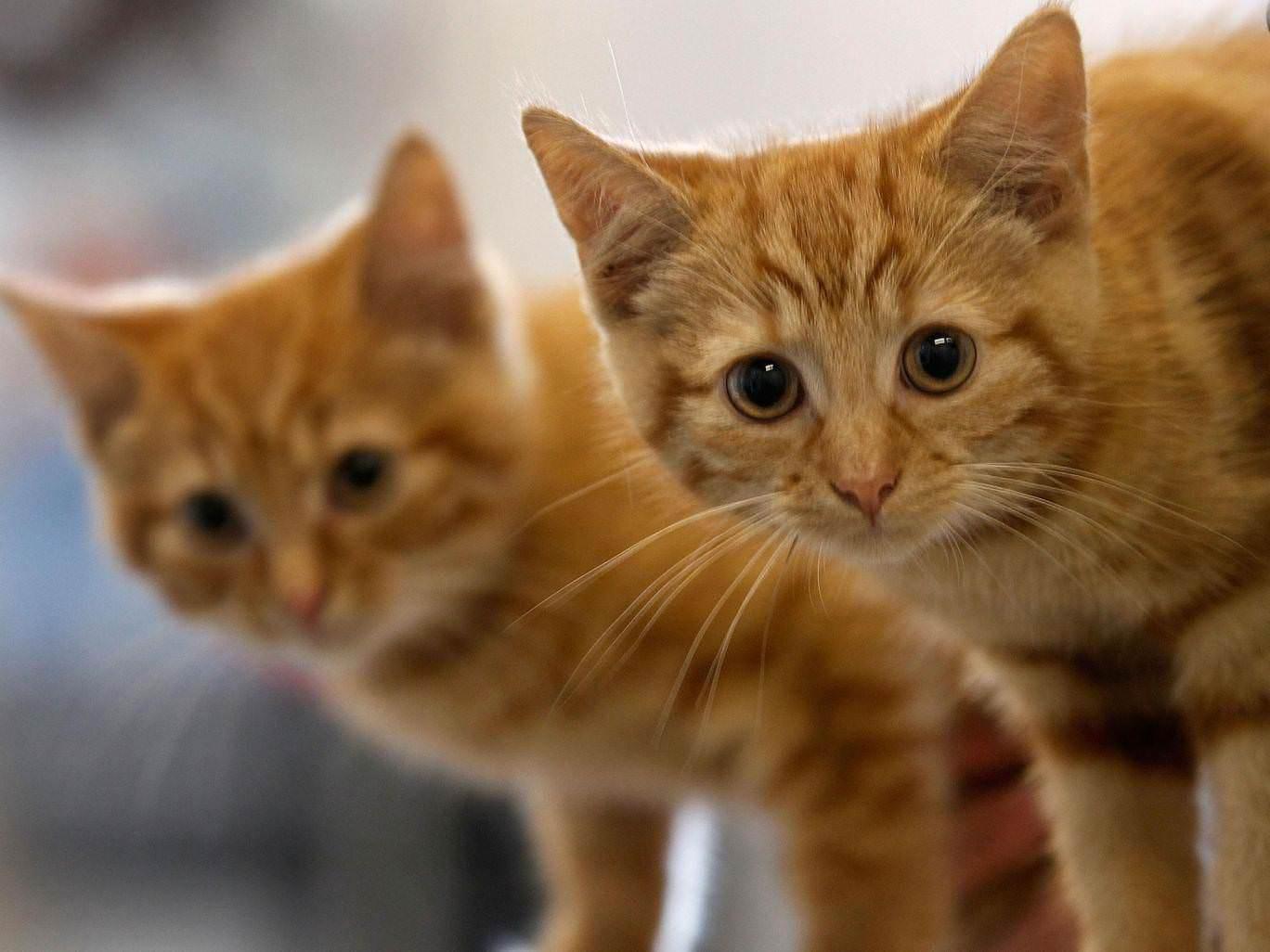 Croydon Cat Killer death toll reaches 400 animals