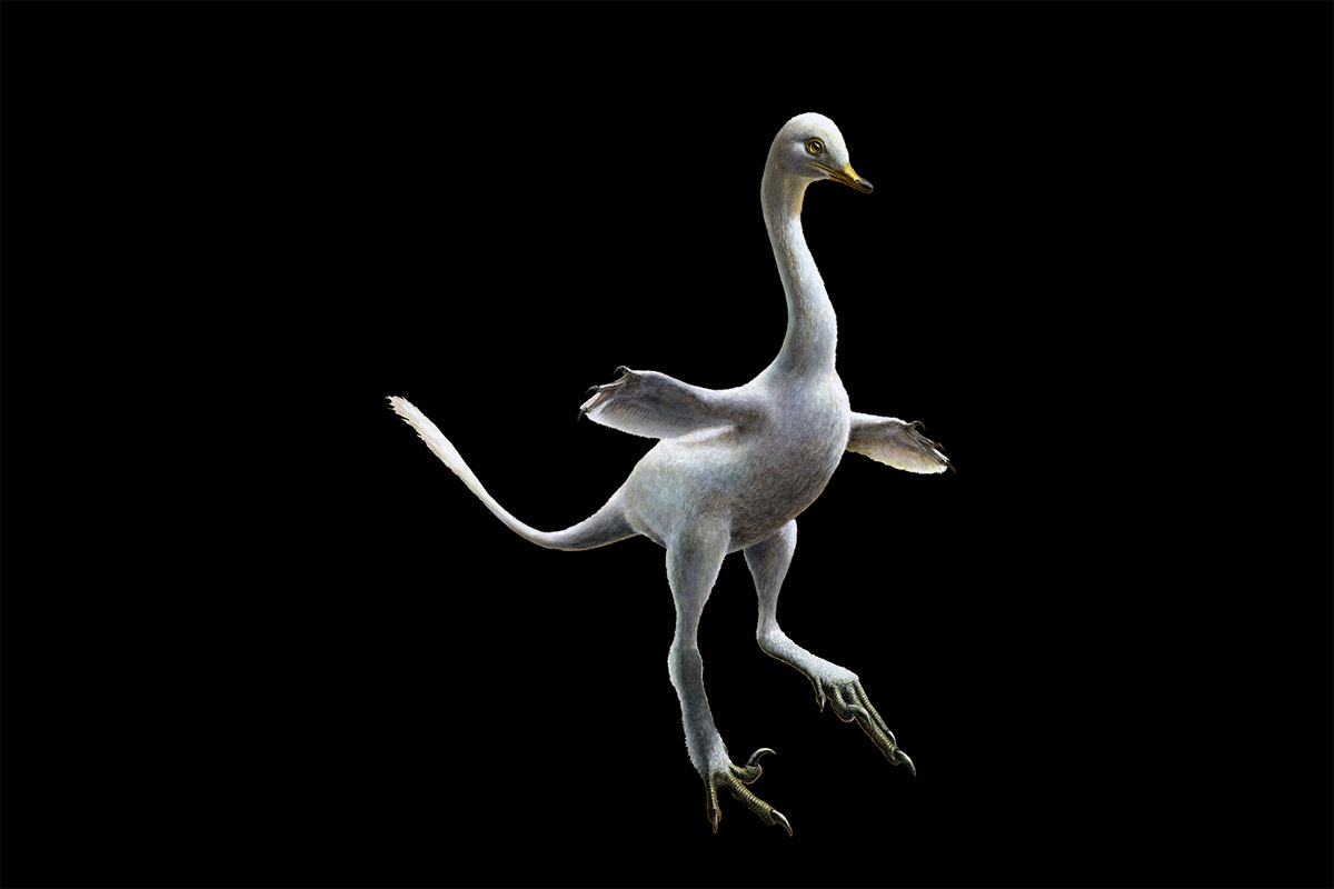 Duck Like Dinosaur Discovered, Says New Study