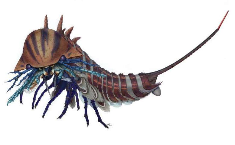 Habelia Optata: A 508-Million-Year-Old Sea Creature