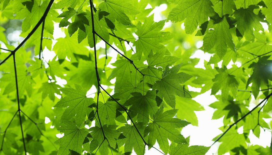Scientists Discovered the Origin of Photosynthesis