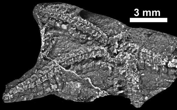 435 Million-year-old Starfish Found in Galway, Report