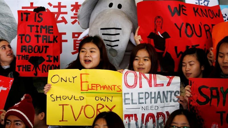 Hong Kong to ban ivory sales