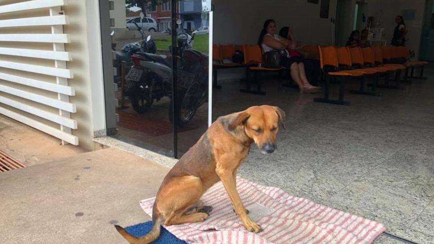 Loyal Dog Refuses To Leave Hospital After Owner's Death