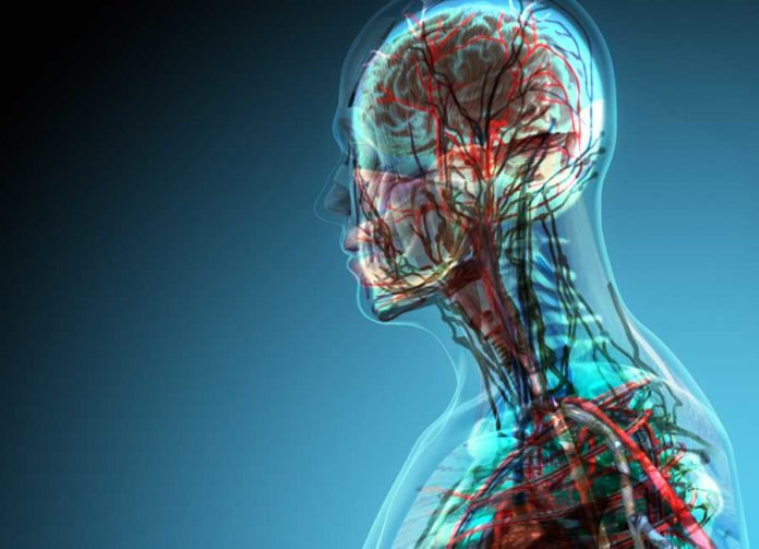 New Human Organ Discovered Called Interstitium
