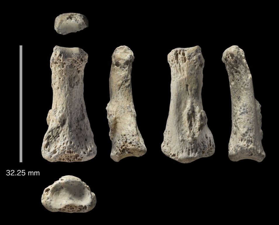 88,000-year-old finger found in Saudi Arabia, Researchers Say