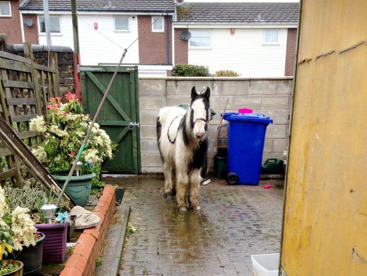 Pony dumped in backyard of Stoke-on-Trent home