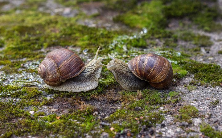 Snail Memory Transplant: Scientists transfer memory between animals
