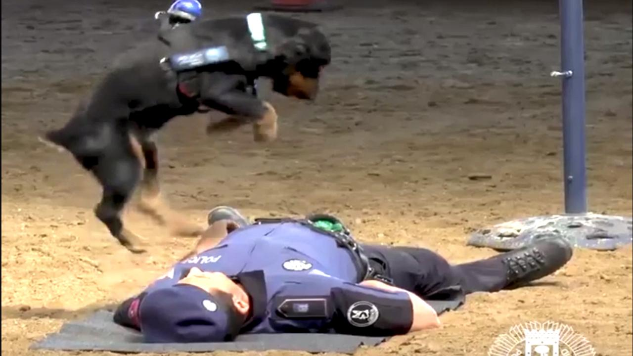 Police dog performs CPR in viral video (Watch)