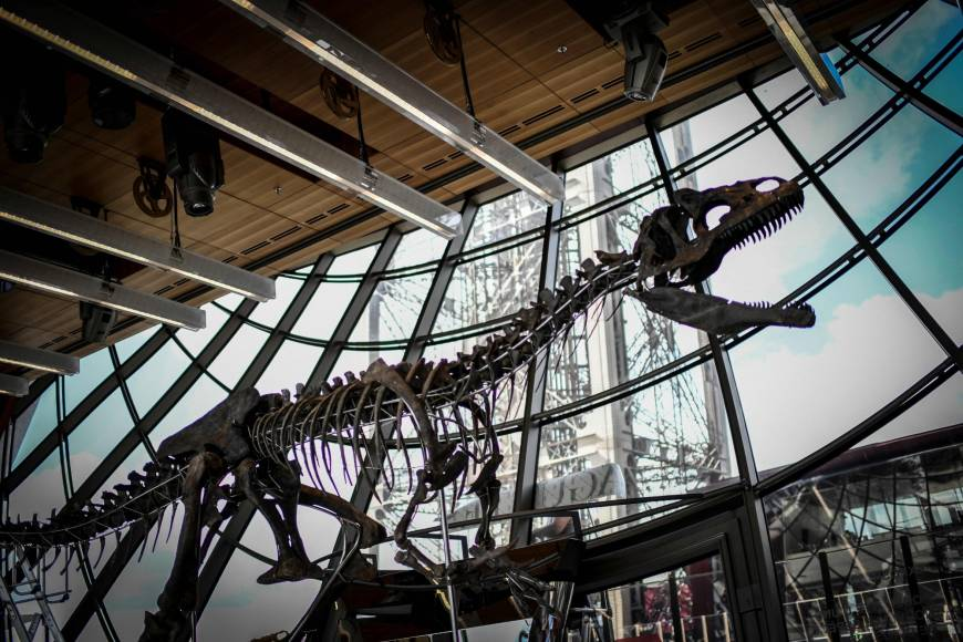 Rare dinosaur skeleton sells for over $2 million at Paris auction