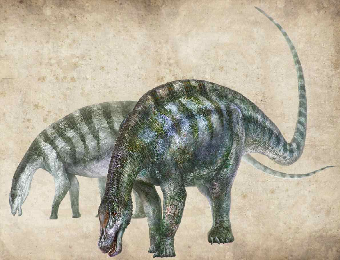 Amazing Dragon Dinosaur Species Discovered in China