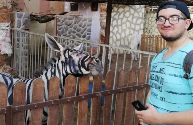 Egypt Zoo Tries to Pass Off Painted Donkey As Zebra
