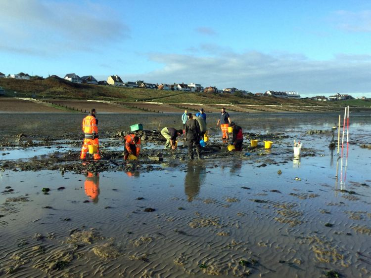 Tudor shipwreck discovered lying in mud to be preserved on beach