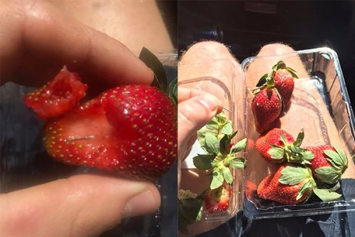 Needles In Australian strawberries? Hunt for clues after needles found in supermarket