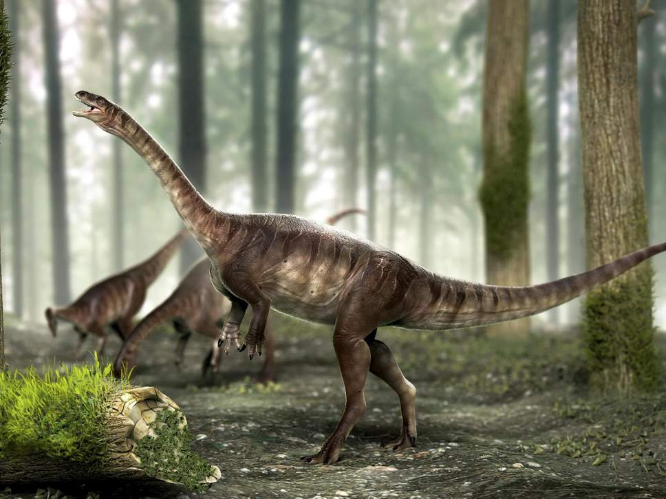Vegetarian dinosaur discovered in South America (Reports)