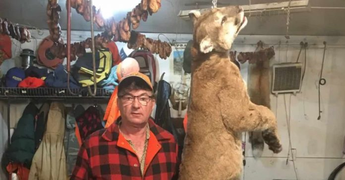 Manitoba trapper accidentally snares cougar near Swan River