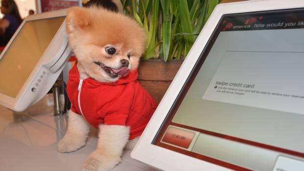 Boo world's cutest dog dies at 12 from 'broken heart'