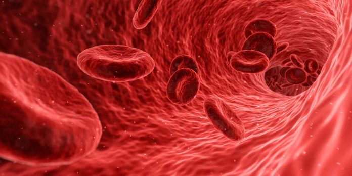 Researchers grow human blood vessels in a Petri dish (Reports)