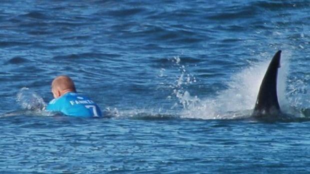Australian surfer critical after shark attack, Report