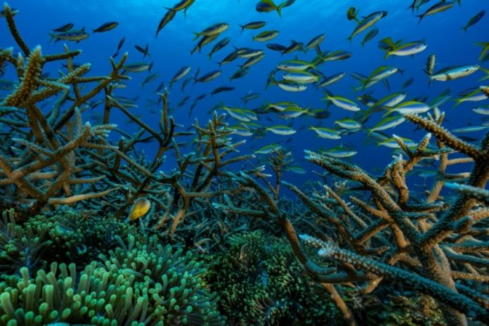 Great Barrier Reef at threat from dirty water due to recent floods, Report