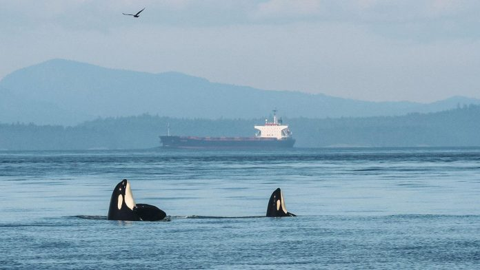 Ocean blob harming whales, says new research