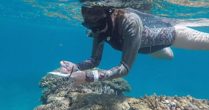 Satellites in effort to save the world's coral reefs (Reports)