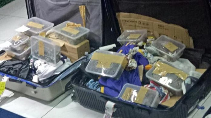 Turtles, tortoises found in abandoned luggage (Photo)