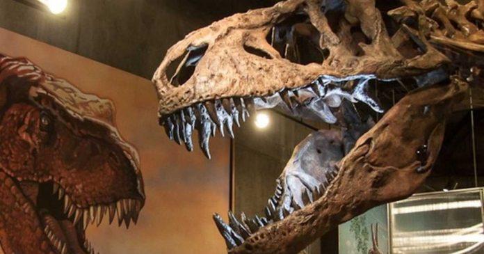 Tyrannosaurus Rex world's biggest Discovered in Saskatchewan