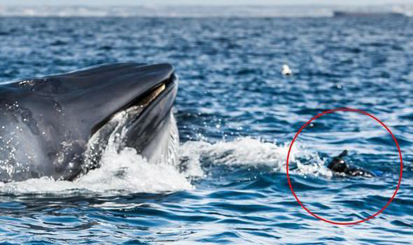 Whale swallowed diver off the coast of South Africa (Video)