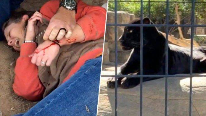Woman attacked by jaguar at Wildlife World Zoo (Photo)