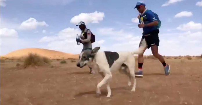 A Dog Named Cactus Is Dominating the Marathon des Sables 2019