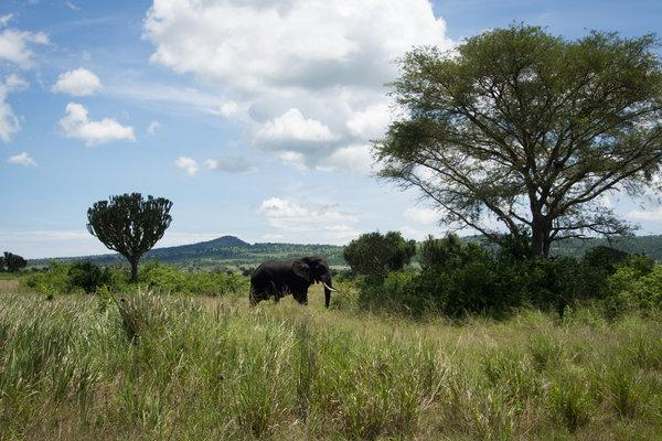 American tourist kidnapped in Uganda, held for $500000 ransom