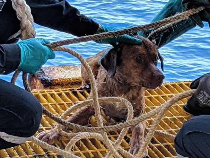 Dog rescued off Thailand, found swimming more than 135 miles from shore