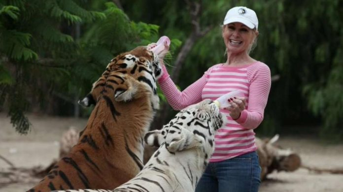 Patty Perry, Wildlife activist injured by two tigers