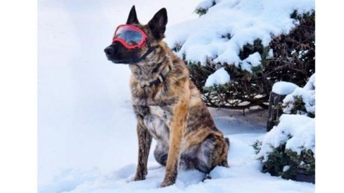 Lebanon Police K-9 receives safety goggles donation