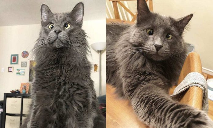 Cross-eyed rescue cat Belarus earns thousands of dollars, Report