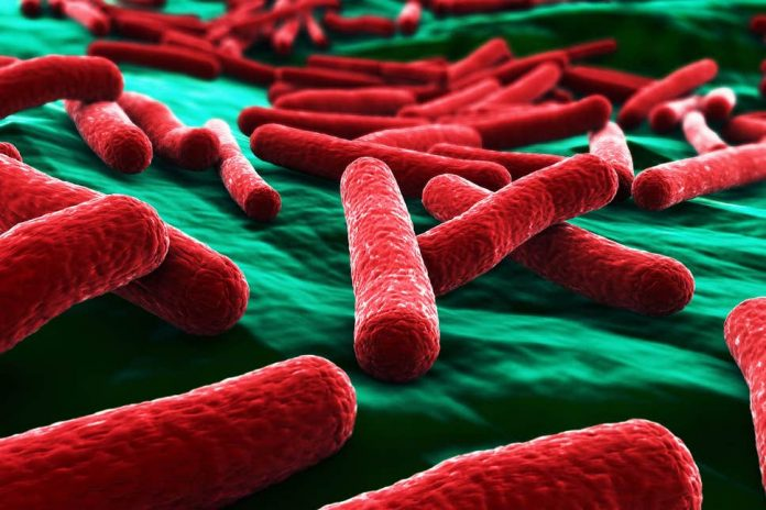 E.coli toxin in gut can trigger bowel cancer, Report